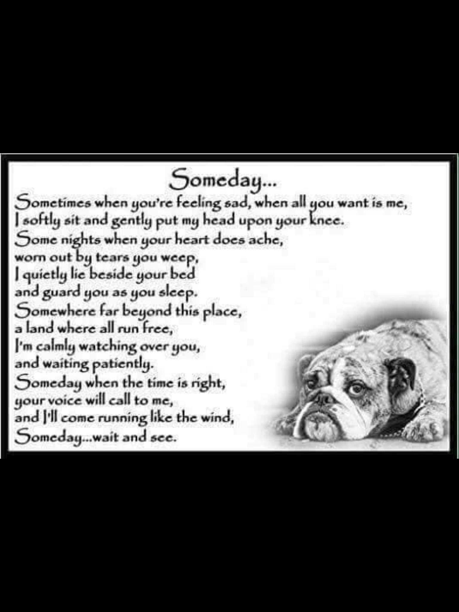 The wiggles bulldog memorial page